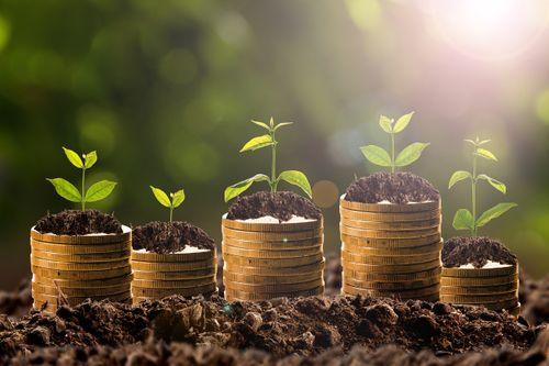 money growth in soil